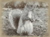 Squirrel - ID 16218-130710-2946