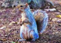 Squirrel - ID 16218-130716-8114