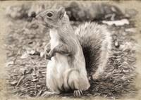 Squirrel - ID 16218-130650-5647
