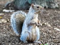 Squirrel - ID 16218-130653-1304