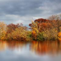 Autumn Pond Reflections Art Prints & Posters by Jessica Jenney