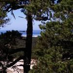 """Oregon Dunes 025"" by Wintercreeks"