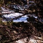"""Oregon Dunes 028"" by Wintercreeks"