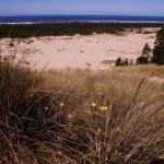 """Oregon Dunes 041"" by Wintercreeks"