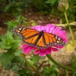 """Garden Jewel"" by hannahsview"