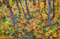 Forest_Colors