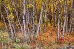 "Wonderful Woods Wonderland by James ""BO"" Insogna"