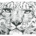 """Snow Leopard"" by Remrov"