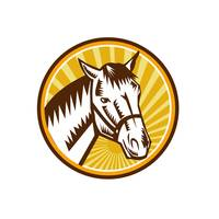 white-horse-head-sunburst-CIRC-WC_5000