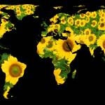 """World Map Silhouette - Sunflowers"" by Alleycatshirts"