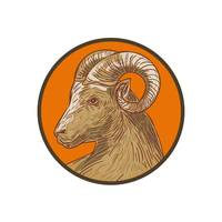 ram-goat-head-side-CIRC-DWG_5000