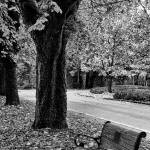 """Park bench in the fall black and white"" by memoriesoflove"