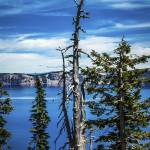 """Withered tree on Crater Lake"" by memoriesoflove"