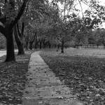 """Park on a fall day black and white"" by memoriesoflove"