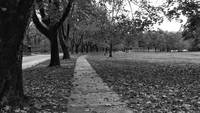 Park on a fall day black and white