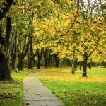 """A park sidewalk on a fall day"" by memoriesoflove"