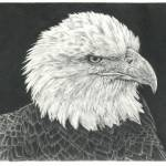 """Bald Eagle"" by Remrov"