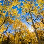"""rays_through_golden_trees"" by DanBourque"