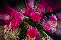 Pink_Roses_Bouquet_Explosion