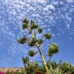 """""""Agave Sky P8220404 JPG 8x10"""" by steveondrusphotography"""
