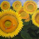 """Sunflowers"" by KenMoore"