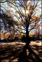 Fall Foliage  Playground Tree