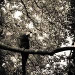 """""""angelikadancefloor-1388"""" by TGCSPhotography"""