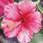 """Pink Hibiscus"" by IrinaSztukowski"