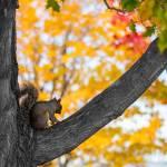 """""""Squirrel"""" by lavidabella"""