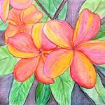 """Frangipani Blossom"" by mkanvinde"