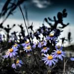 """1475259362995"" by SunbirdPhotography"