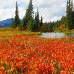 """Mount Rainier National Park Autumn"" by artsandi"