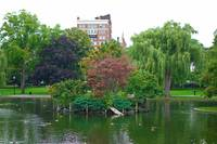 Boston Common Study 9