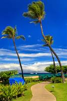 a_path_in_kaanapali_MG_7220_LR