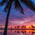 """Palm Tree at Twilight"" by cdomenig"