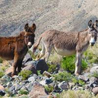 Mama Burro and her Babe by Sandy O'Toole