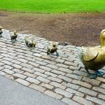 """Make Way for Ducklings Study 3"" by robertmeyerslussier"