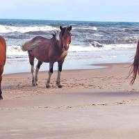 Trio of Beach Buddies by Sandy O'Toole