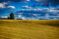 Wheatfield Washington State