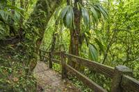 Jungle walkway