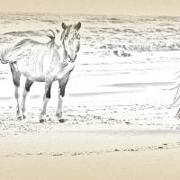 Trio of Wild Horses by Sandy O'Toole