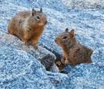 Squirrels gallery