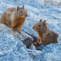 Squirrelly Buddies by Sandy O'Toole