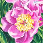 """Peony Sketch"" by KellyEddington"