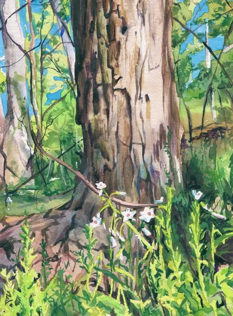 Stunning tree trunks artwork for sale on fine art prints for Tree trunk art
