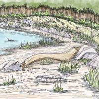 Maine shoreline Art Prints & Posters by Dan Anderton