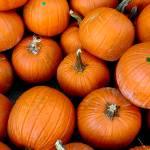 """""""Pumpkin"""" by Acedarter"""