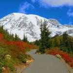 """Mount Rainier National Park"" by artsandi"