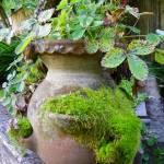 """Garden"" by vpicks"