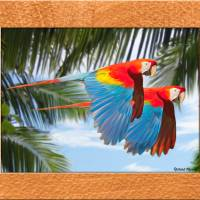 """flying macaws"" by RichardMurrey"